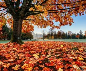 autumn colors, canada, and cityscape image