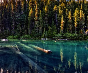 canada, forest, and lake image