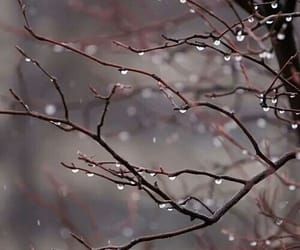 rain, tree, and winter image