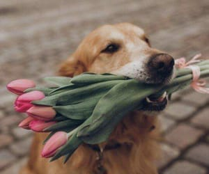 dog, flowers, and perro image