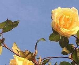 header, yellow, and roses image