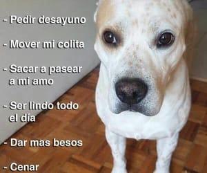perrito, puppy, and dog image