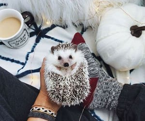coffee, style, and adorable image
