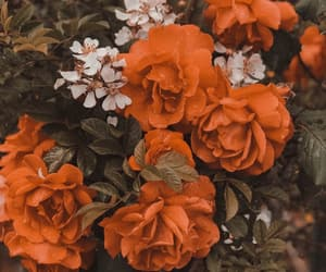 """We never look at flowers and think """"that one would be prettier if it was taller, or thinner"""" because they are all beautiful just as they are. So, why do we do that with people? We are all beautiful as we are."""