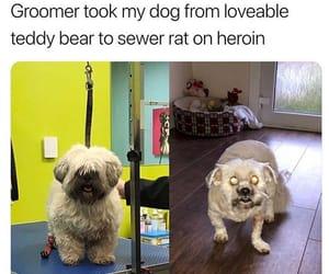 funny animals image