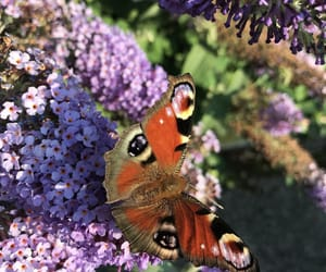 beautiful, orange, and butterfly image