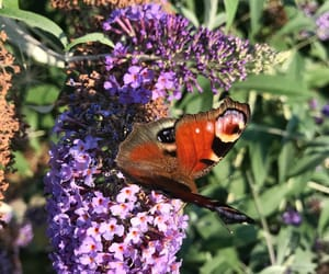 beautiful, flowers, and butterfly image