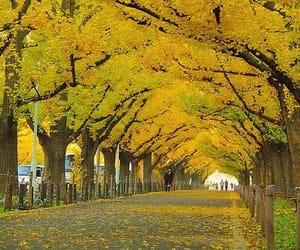 autumn, harvest orange, and leaves yellow image