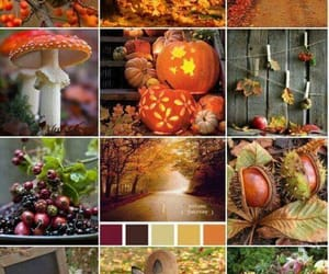 Pin by Samara Carter on All about Autumn | Pinterest | Autumn, Gap year and Ireland