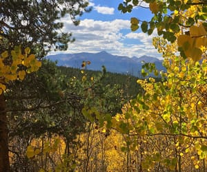 aspen, colorado, and fall image