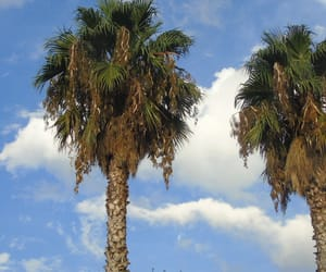 andalucia, clouds, and palm image