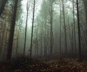 alternative, dark, and nature image