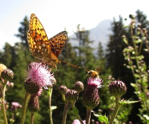 butterfly, mountain, and photography image