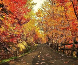 autumn, brown, and colors image