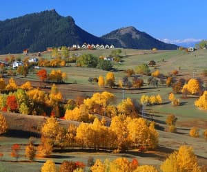 autumn, fall, and golden image