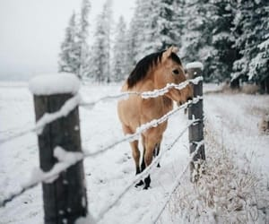 horse, animals, and cold image