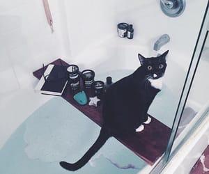 animal, bathroom, and cat image
