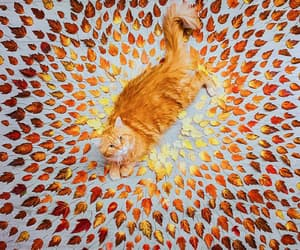 autumn, leaves, and cat image