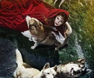 wolf and red image