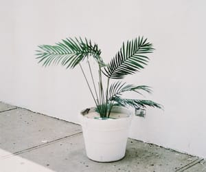 plants, white, and green image