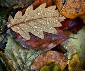 autumn, leaves, and raindrops image