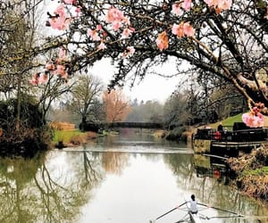 avon, pink flowers, and river image