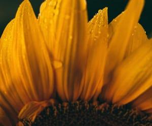 beauty, photo, and yellow image