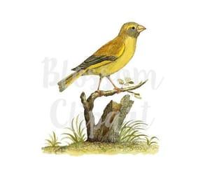 etsy, bird illustration, and vintage image image