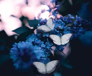 beauty, blue, and butterfly image