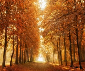 autumn colors, holland, and landscape photography image