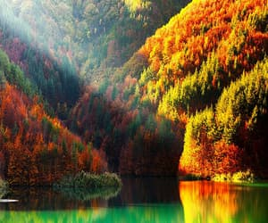 autumn colors, forest, and tumblr image