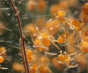 arachnid, nature photography, and spider image