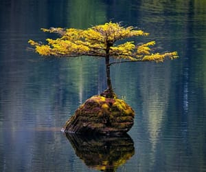 tree and wilderness image