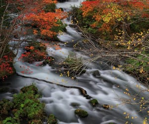 autumn colors, nature photography, and waterfall image