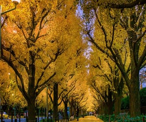 autumn colors, sidewalk, and blink182 image