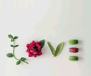 flower, fresh, and love image