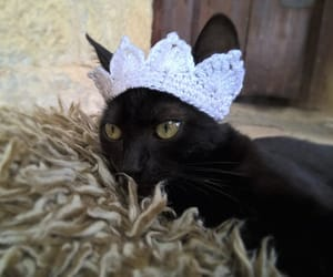 etsy, pet costume, and pet accessories image