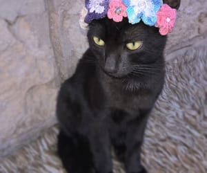 etsy, pet supplies, and headpiece for cat image