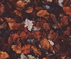 article, autumn, and colors image