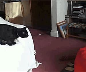 bag, cat, and funny image