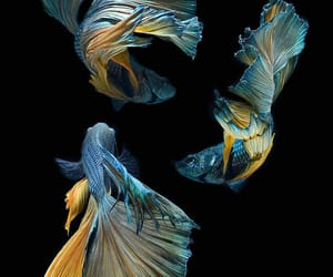 fish and blue image