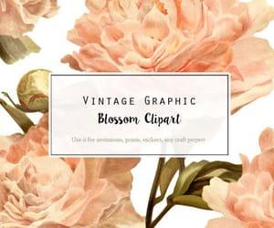 botanical, flower illustration, and clip art flower image
