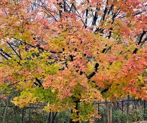 autumn, connecticut, and leaves image