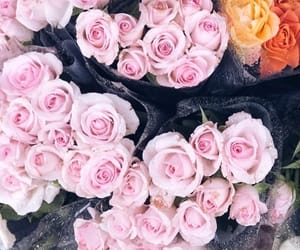 flowers, roses, and suns image