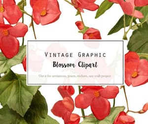 botanical, digital flower, and vintage graphic image