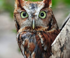 animals and owl image