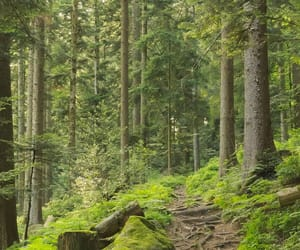 black forest, germany, and woods image