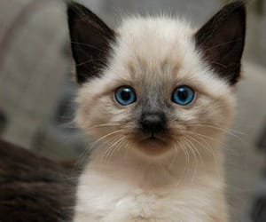 adorable, blue eyes, and sweet image