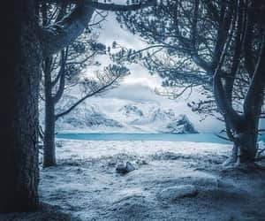 beauty, snow, and nature image