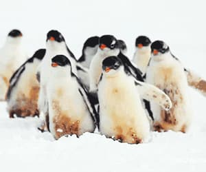gif and penguin image